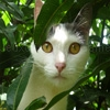 Play Jigsaw: lookout cat now